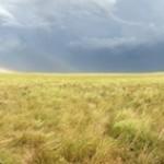 1 Plains