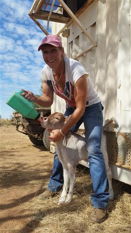 3.7 Linda feeding a poddy (Small)