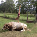 Forget the Olympics, I'd take cows any day!