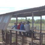 3.7 Occy, Jackson, Marcus & Dartanion - Waiting to process calves copy