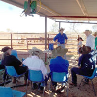 The resilience of rangelands communities