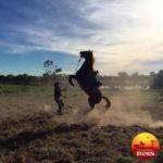 All the beautiful horses