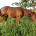 Managing horses on the floodplain
