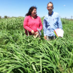 Blog 2.1 DAFWA's Geoff Moore and Carol Harris from NSW DPI with a new panic grass variety (Megamax 059) at Kilto Station copy