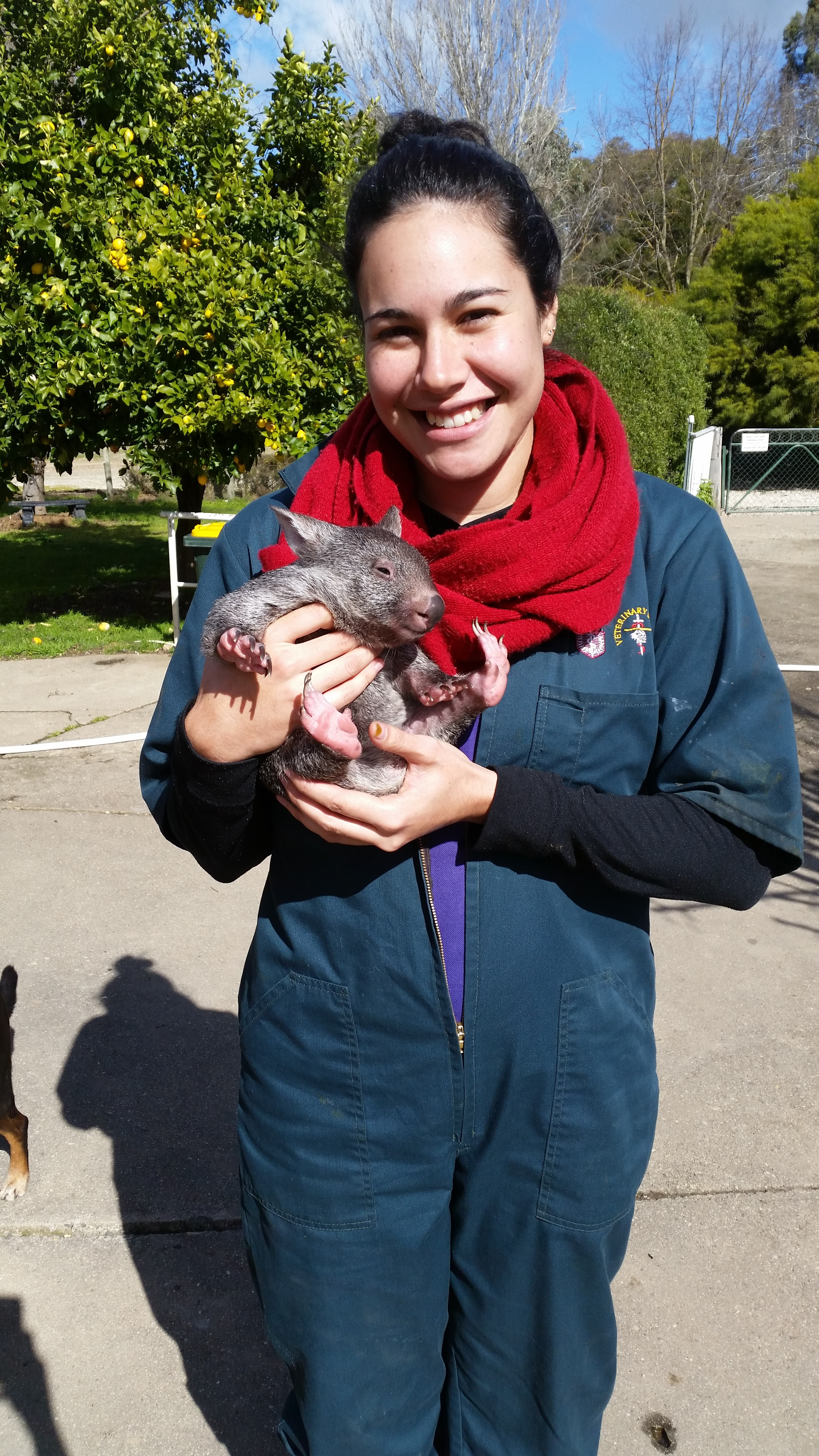 1.1 Me cuddling a baby wombat