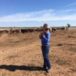 Blog 1 - Examining some calving cows being fully hand fed copy