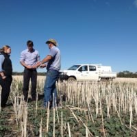Blog 3 - vet students talking to the farmer in the canola paddock copy