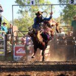 3.16 Bull Ride 2 copy