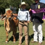 Katherine Show Supreme Exhibit - Rural College Pepper with Kristy Gamble and judge Terry Connor