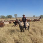 1.1 Tailing Weaners copy