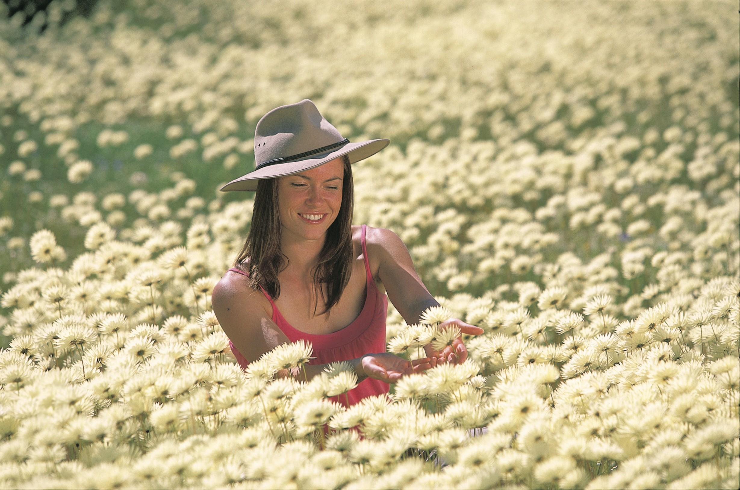 Lady in white Splendid Everlastings (Rhodanthe chlorocephala)